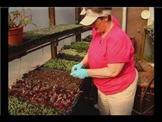 Video: Growing Hanging Basket Flowers from Seed
