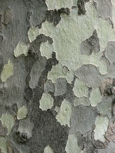 trees and other color and texture ideas from nature.