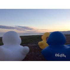 【06k12m】さんのInstagramをピンしています。 《#picture #cute #pictures #beautiful #Japan #japanese #LOVE #train #duck #sea  #Sky #photographer  #海#空 #富士 #静岡 #夕焼け #写真 #写真好きな人と繋がりたい #写真撮ってる人と繋がりたい #duck #adventure #アヒル #美貌の青空》