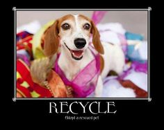 Adopt and save a life...the best sort of recycling, motivated by the heart...<3