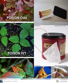 "Great Summer Camp Ideas - Good to know about the ""poison"" plants."
