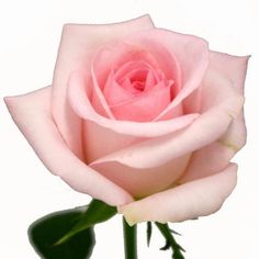 These Sweet Akito roses from Blooms by the Box feature a gorgeous pale pink tone and an attractive wholesale price. Blush Flowers, Purple Roses, Diy Flowers, Beautiful Pink Roses, Love Rose, Floral Wedding, Wedding Flowers, Color Bordo, Bulk Roses