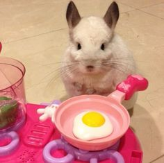She also enjoys cooking. Breakfast is her favorite meal. | This Is The Most Important Chinchilla On Instagram Right Now