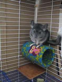 Make this clever hide for your chinchilla, mice or hamsters! Cut a piece of PVC pipe to the desired length. Cut a piece of fabric to twice the length of the PVC pipe and fold the fabric over the pipe.