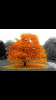 Aja Washington- I think the leaves on the tree and on the ground are meant to be emphasized with bright color.