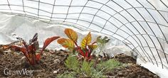 Use low tunnels to keep your fall garden going into winter.