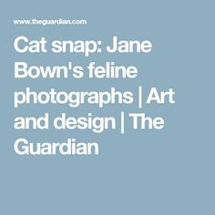 Cat snap: Jane Bown's feline photographs | Art and design | The Guardian