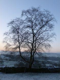 earlgreyandscones: Snowy mornings.