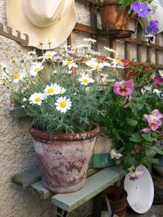 My little garden #lavenderhousevintage
