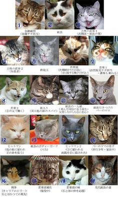 the Japanese-cat Mafia. I Love Cats, Crazy Cats, Cute Cats, Animals And Pets, Funny Animals, Cute Animals, Funny Cat Faces, Funny Cats, Japanese Cat