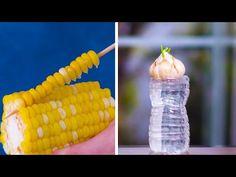 How to Replant Vegetables!   Gardening Hacks and Tips by Blossom - YouTube Diy Garden Projects, Diy Garden Decor, Diy Decoration, Garden Ideas, Gardening For Beginners, Gardening Tips, Gardening Services, Gardening Courses, Gardening Gloves