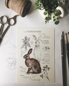 Sketch Book Natural Study European Hare Print - Printed on Natural Savoy Cotton Paper, this print features one of my Natural Science journal entries of the European Hare. Originally drawn in watercolor and ink. Dimensions: 5 x Art And Illustration, Fuchs Illustration, Art Sketches, Art Drawings, Arte Sketchbook, Moleskine Sketchbook, Nature Journal, Sketchbook Inspiration, Sketchbook Ideas