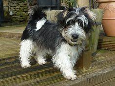 sporting-lucas-terrier 2
