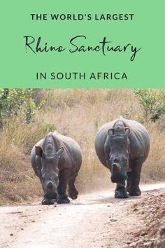 Visit the world's largest rhino sanctuary and volunteer with rhinos at Care for Wild Africa in the Greater Kruger Region of South Africa - learn about how to fight rhino poaching!