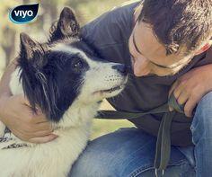 Vous partez en voyage sans votre chien? N'oubliez pas de régler un 'dogsitter'! Votre chien a besoin d'attention.