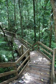 Jindalba rainforest boardwalk, Cape Tribulation (north of Cairns).