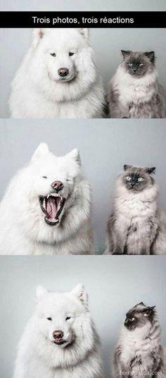 23 photos légendées de chats qui vous feront passer du rire aux larmes