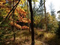 PÍSNIČKY A VERŠE K TÉMATŮM Trunks, Plants, Drift Wood, Tree Trunks, Plant, Planets
