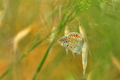 Photo Butterfly by Mustafa Öztürk on 500px