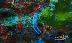 "A fireworm at the ""Superior Producer""... #explore #tauchen #relaxedguideddives #diving #tauchen #curacao #curacaotb #wreck #scuba #scubadiving"