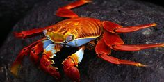 The Galapagos Bowl: Ecuador's star football line-up | Intrepid Travel Blog