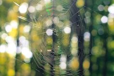 spider web -  spider web free stock photo Dimensions:2256 x 1504 Size:0.58 MB  - http://www.welovesolo.com/spider-web/