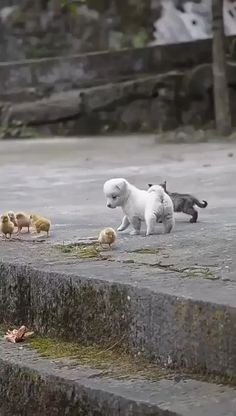 Little Besties - Tiere / Animals - Adorable Animals Cute Little Animals, Cute Funny Animals, Funny Dogs, Cute Cats, Funny Birds, Very Cute Puppies, Dogs And Puppies, Doggies, Cute Animal Videos