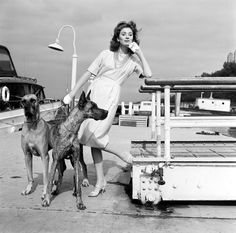Portrait of the American model and actress Suzy Parker, early Get premium, high resolution news photos at Getty Images Divas, Suzy Parker, The Blues Brothers, Famous Dogs, Famous People, Dane Puppies, Jean Shrimpton, Great Dane Dogs, Dog Carrier