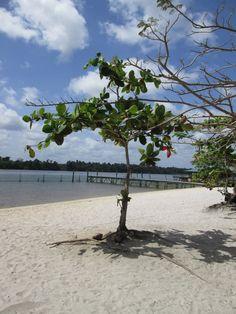 White beach, Suriname