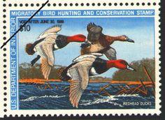 Readhead Ducks, by Arthur G. Andersen (1987-1988)