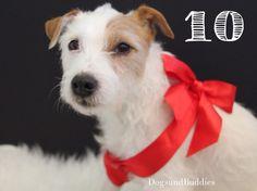 Hundeblog dogsundbuddies.com - Mickey - Parson Russell Terrier - Parson Russell - Parson - Terrier - Blog - Hundeblogger - Dogblog - Dogblogger - Niedersachsen - Oldenburg - Oldenburger Hunde - Weihnachten - Feiertage
