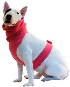 64 Best Puppy Clothes Images Dog Dresses Dog Clothing Decorations