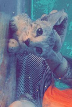 Cute Tumblr Pictures, Animals, Gatos, Animales, Animaux, Animal, Animais