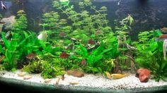 Buffet Aquarium. Merk Juwel 450