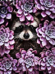 Raccoon Flowers - Diamond Painting Kit - 40x50cm / Round
