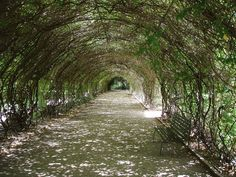The Wisteria Arch in the Botanic Gardens in Adelaide, Australia #travel…