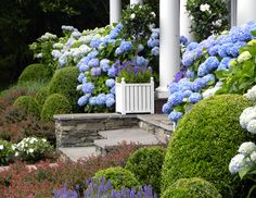 love the colors - Past Projects - Hamptons Landscaping / Summerhill Landscapes, Sag Harbor NY (631) 725-0005