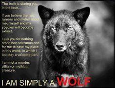 Storm Dancer Shared Soul Wolf Journey Photo