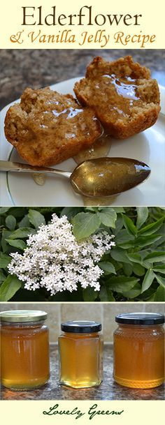 Recipe for Elderflower and Vanilla Jelly - so good you'll want to eat it out of the jar! For other recipes try out pinterest board.. http://www.pinterest.com/growveg/canning-and-preserving-a-z/