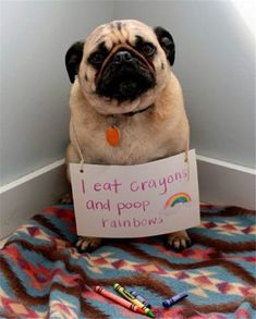 40+ Most    Popular Dog Shaming Shenanigans For Their Crimes #dogshaming