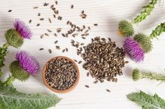 Does Milk Thistle Help Diabetes? Curious to Know Just How Does Milk Thistle Help Diabetes? It has been proven that milk thistle could help manage diabetes by Natural Detox, Natural Herbs, Milk Thistle Benefits, Milk Thistle Extract, Heavy Metal Detox, Thistle Seed, Healthy Liver, Weight Loss Tea, Weight Gain