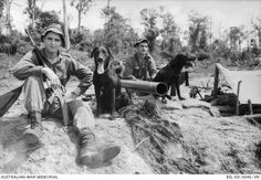 Two cross Kelpie-Labrador dogs, Milo (left) and Trojan, trackers working with 6RAR /NZ (ANZAC) (The ANZAC Battalion comprising 6th Battalion, The Royal Australian Regiment and a component from the ...