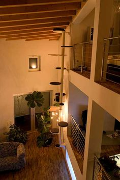 Floor to ceiling cat tree Cat Walkway, Cat Stairs, Patio Trees, Cat Heaven, Diy Cat Tree, Cat Activity, Cat Cafe, Cat Room, Cat Condo