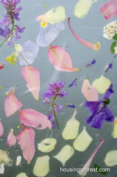 Flower Suncatchers with contact paper; could pre-cut contact paper in flower shape...