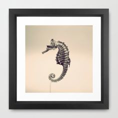 Water Pony Framed Art Print