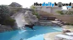Amazing Doberman Loves The Water Slide - The Daily Hound — The Daily Hound #pool #waterslide #swimming