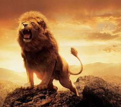 Here me roar