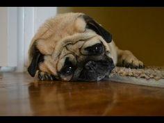 Sad Dog Diaries