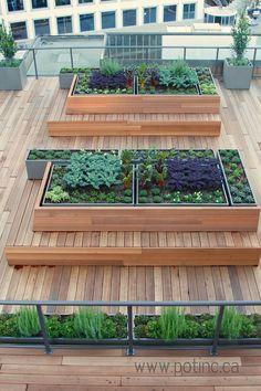 Résultats de recherche d'images pour «best herb fine city garden»