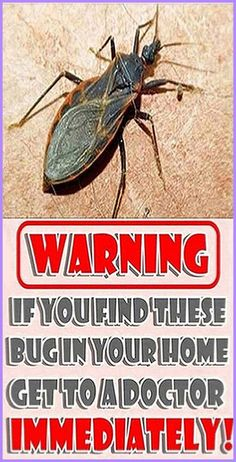 According to the Centers for Disease Control and Prevention, a deadly bug has been reported in southern regions of the United States. Even though the bug look… Holistic Remedies, Herbal Remedies, Health Remedies, Home Remedies, Natural Remedies, Natural Life, Natural Living, Natural Healing, Holistic Healing